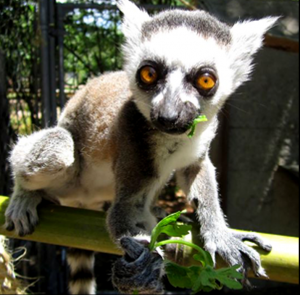 Destin attractions ecwr-zoo