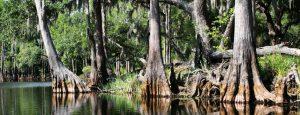 Orlando airboat tours Marsh Landing Adventures