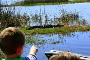 Orlando airboat tours Wildlife Florida Airboats and Parks