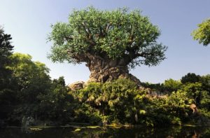orlando attraction packages animal kingdom