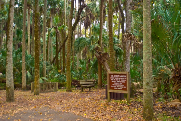 Florida Ancient Hammock Trail